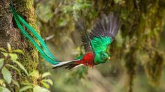 Que Come El Quetzal2