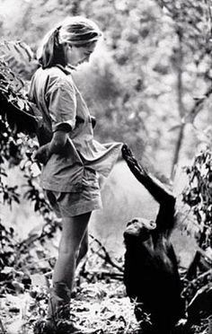 """Read """"Jane Goodall: Animal Scientist and Friend"""" by Connie Jankowski available from Rakuten Kobo. Jane Goodall is the world's leading authority on chimpanzees. This inspiring biography will have readers engaged and del. Jane Goodall, Primates, Mundo Animal, Women In History, Anthropology, Photos, Pictures, In This World, My Idol"""