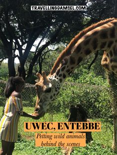 Petting and feeding wild animals in Uganda, Africa Baby Elephant, Giraffe, Serval Cats, Biggest Elephant, Ostriches, Education Center, Cheetahs, Wildlife Conservation, Leopards