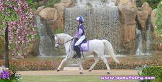 Ponies are Forever...photo by Jennifer Walker  www.facebook.com/cowboymagic