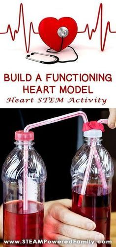 This Heart STEM activity to build a functioning heart model uses all 4 STEM pillars - Science, Technology, Engineering and Math. Kids will spend some time learning about their own heart rates, then how blood flows through the body. Stem Science, Middle School Science, Science Experiments Kids, Science Classroom, Science Lessons, Teaching Science, Science For Kids, Science Projects, Science Education