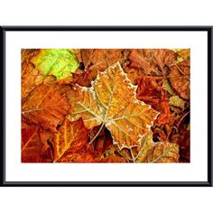 @Overstock - Add a touch of natural color to any room with this contemporary metal framed art print. The beautiful 'Frost on Leaf' art print features a group of realistic leaves designed in vibrant fall colors that will give your decor an outdoor feel.http://www.overstock.com/Home-Garden/John-K.-Nakata-Frost-on-Leaf-Metal-Framed-Art-Print/6205209/product.html?CID=214117 $144.99