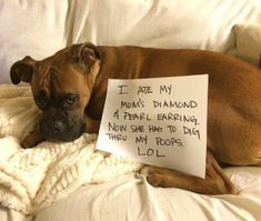 Disobedient Dogs Who Are Definitely on Santa's Naughty List