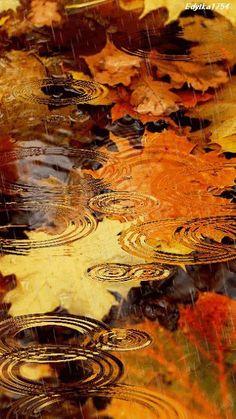 Rain drops on Fall leaves, beautiful Fall colors. Autumn Rain, Autumn Nature, Nature Nature, Pics Art, Rain Drops, Rainy Days, Belle Photo, Fall Halloween, Beautiful World