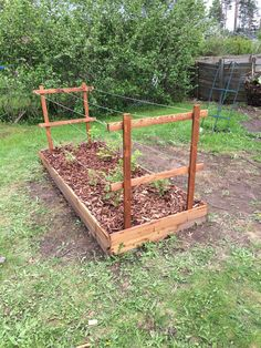 Diy raised bed made from heat treated wood (pine or similar) and trellis for raspberries.