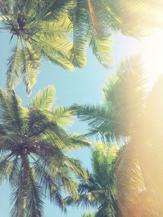 Sunshine & palm trees. <3