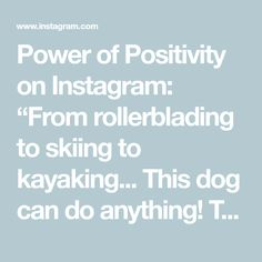 """Power of Positivity on Instagram: """"From rollerblading to skiing to kayaking... This dog can do anything!  Thanks for sharing @lilmanlife"""" Thanks For Sharing, Power Of Positivity, Do Anything, Kayaking, Skiing, Thankful, Adventure, Canning, Dogs"""