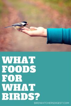 This bird food list will help you choose the right seeds, fruits, nuts, grains and more to attract the birds you want to watch in your own backyard.
