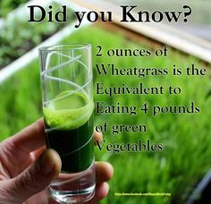 Wheatgrass is a food prepared from the cotyledons of the common wheat plant, Triticum aestivum (subspecies of the family Poaceae). It is sold either as a juice or powder concentrate. Wheatgrass differs from wheat malt in that it is served freeze-dried or fresh, while wheat malt is convectivelydried. Like most plants, it contains chlorophyll,amino acids, minerals, vitamins, and enzymes.
