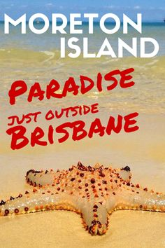 Moreton Island: Things To Do in Paradise Just Out Of Brisbane Queensland Australia, Australia Travel, Australia Honeymoon, Things To Do In Brisbane, Seasons In The Sun, Fraser Island, Travel Info, Travel Tips, New Zealand Travel