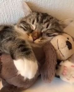 Not quite ready for Monday yet, Mr. Nelson and I💞😴💤 But he's mine and I love him💗🐒 - Tiere - Nette und freche Katzen-Fotos Cute Cat Gif, Cute Funny Animals, Cute Baby Animals, Funny Cats, Wild Animals, Cute Cats And Kittens, I Love Cats, Crazy Cats, Kittens Cutest