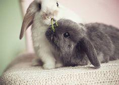 Animal. rabbits