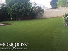 Grass, Golf Courses, Grasses, Herb