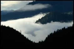"""I have wiped out your transgressions like a thick cloud and your sins like a heavy mist...Isaiah 44:22-23a """"There is joy in forgiveness. Olympic National Pk"""