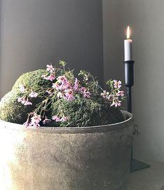 Pot met mosballen kandelaar Grey Walls, Diana, Vintage Home Decor, Planter Pots, Shabby, Home And Garden, Rustic, Interior, Flowers