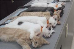 All six were awaiting their neuter at the vet's.  They were in never never land.  I was big into rescue at that time.