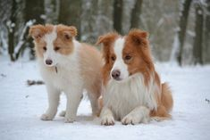 What a beautiful pair - discovered on blog | Simbas World | Tales of a Border Collie