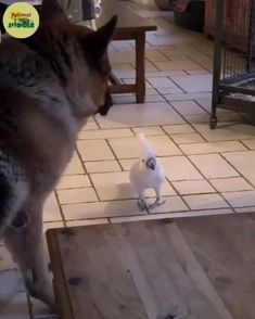 Funy Animals, Cute Funny Animals, Cute Baby Animals, Animals And Pets, Animal Funnies, Funny Animal Videos, Funny Animal Pictures, What Kind Of Dog, Sleepy Cat