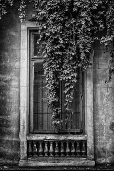 The Time Machine by Alex Cruceru - Who lived here? Thank you all for viewing my work and feel free to post your critique! The Time Machine, Marketing Techniques, Bird Cage, Shades Of Grey, Pretty Pictures, Windows And Doors, Serenity, Greenery, Vines
