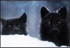 Black Wolves - black-wolves Photo