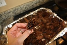 How to make cinnamon scented pine cones for fall!                      ****