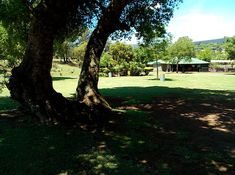 Campsites in Sabie Mpumalanga. With MTB, Hiking, fishing, waterfalls, horse riding. River Camp, Horse Riding, Campsite, South Africa, Waterfall, Hiking, Horses, Plants, Outdoor