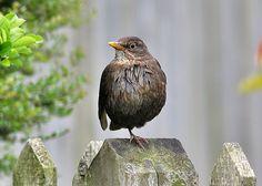 Wellcome Allotment        : Bird watching in the garden