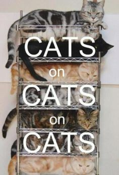 Cats on cats on cats.