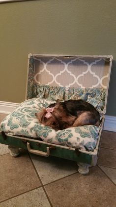 Dog bed Suitcase - please pack me on your next trip!