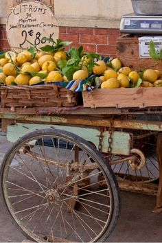 Lemons Menton French Riviera - France - Amoil Riviera Côte D'azur Robert Palomba