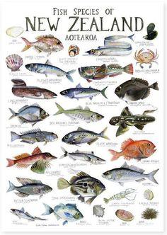 Illustrated fish chart fish food painting and illustrations felt christmas catalogue 2014 sciox Choice Image