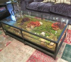 Shadow Box Coffee Table Four Hands Is Made From Solid Br And Iron Gl Opens To Allow For Stunning Display Cover Bottom On Sand My Shells