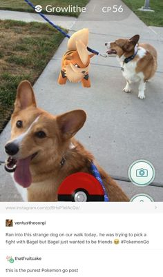 This dog is the pokèmon radar we all need in our lives