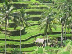 Ma photo Bali Bali, Vineyard, Aqua, Photos, Outdoor, Outdoors, Water, Pictures, Vine Yard