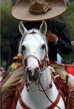 'Meu' principe do cavalo branco... jajajajaja