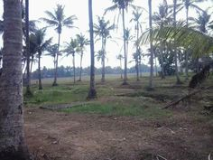 60 Cent Land for Sale in Aluva....