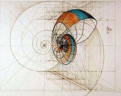 Este me gusta mucho. Geométrico, orgánico, con líneas, color... Fibonacci Ilustração - Geometria Sagrada