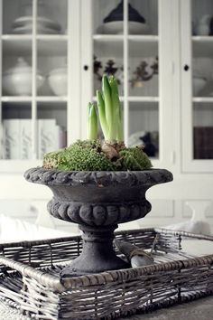 Antique garden urns add so much charm to your decor! Come tour our Victorian house… the BEST part is the decorating! I LOVE salvaged and repurposed antiques and there are so many uses for this old, cast iron, Victorian planter! Interior Bohemio, Garden Urns, Spring Bulbs, Deco Table, Container Gardening, Indoor Plants, Outdoor Gardens, Planting Flowers, Floral Arrangements