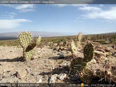 cactus de tucuman - Buscar con Google