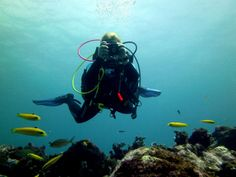 Las Galeras Divers: Dive center and scuba diving school in Las Galeras, Samana, Dominican Republic