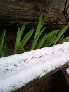Spring-winter war