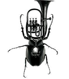 Trompeten-Käfer?