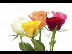 ΕΥΧΕΣ ΓΕΝΕΘΛΙΩΝ - YouTube Rose, Flowers, Youtube, Plants, Pink, Plant, Roses, Royal Icing Flowers, Flower