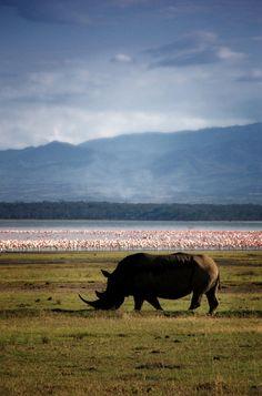 Rhino at Lake Nakuru - LAKE NAKURU, Rift Valley Kenya by David Lazar