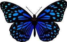 Bildergebnis für mariposas