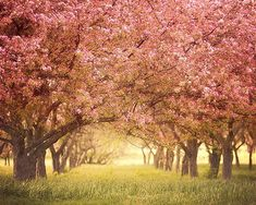 size: Stretched Canvas Print: Pink Blossom by Irene Suchocki : Artists Using advanced technology, we print the image directly onto canvas, stretch it onto support bars, and finish it with hand-painted edges and a protective coating. Beautiful Landscape Photography, Beautiful Landscapes, Fine Art Photography, Nature Photography, Travel Photography, Pink Blossom, Cherry Blossoms, Forest Girl, Pink Trees