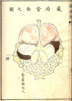 Kaishi Hen, an 18th Century Japanese anatomical atlas | The Public Domain Review
