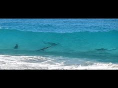 March 7, 2013   VIDEO: Thousands of Sharks Seen Migrating Off the Coast of Deerfield Beach, Florida