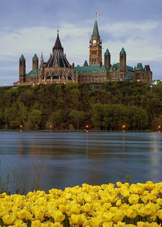 Ottawa - Tulips and Parliament by Saffron Blaze, via Flickr
