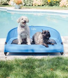 Cool-Air Cot for Dogs - Trailblazer Blue